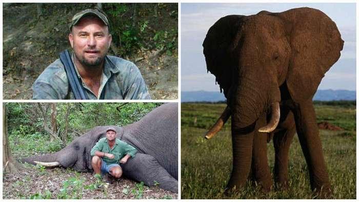 Во время сафари умирающая слониха раздавила охотника (5 фото)