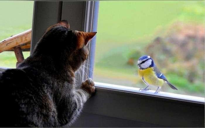 Почему кошки приносят добычу своим хозяевам (5 фото)