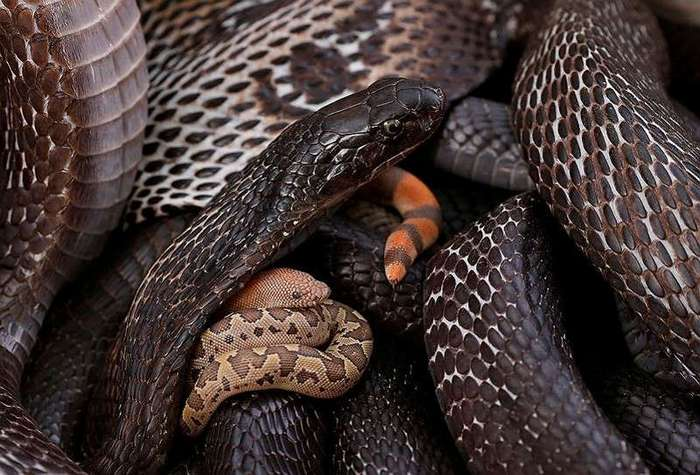 Пригреть змею (8 фото)