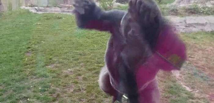 Дети в зоопарке: курьезы и трагедии (8 фото + 11 видео)