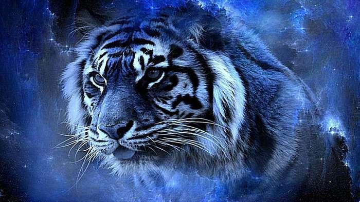 Тигр и Стервятник (1 фото)