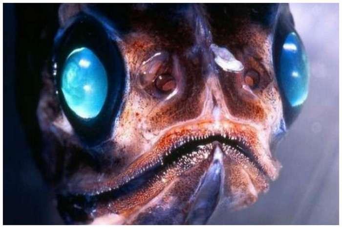 Невероятные монстры океанской бездны (24 фото)