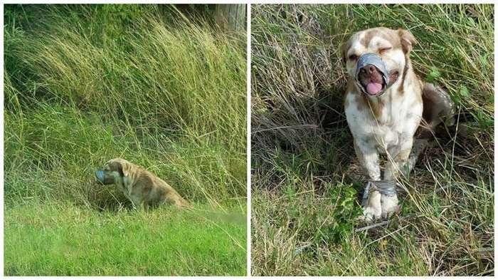 В канаве нашли живого пса со связанными лапами и скотчем вокруг морды (5 фото)