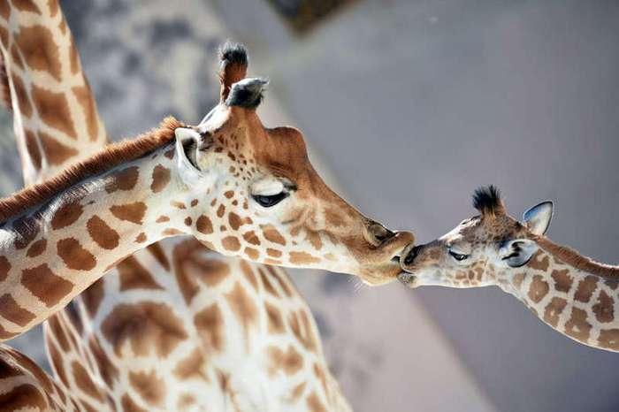 Животные в фотографиях (24 фото)