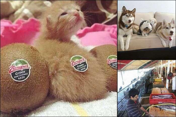 15 вещей и животных, которые прикидываются кем-то другим (16 фото)