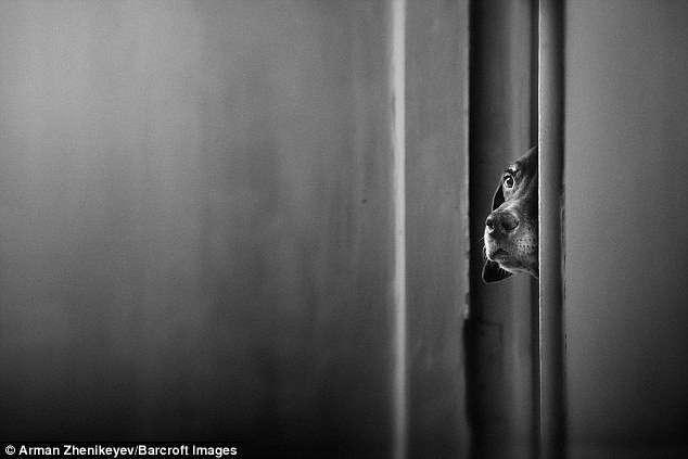 Лучшие фото с конкурса домашних животных Comedy Pet Photography Awards (33 фото)