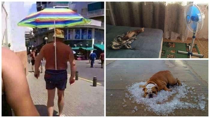 Несколько способов охладиться в жару (25 фото)