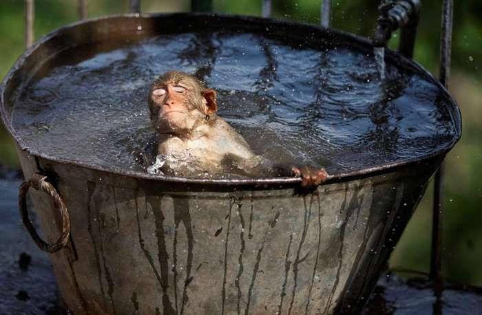 Мокрое полотенце и перец: как спасаются от жары жители разных стран? (20 фото)