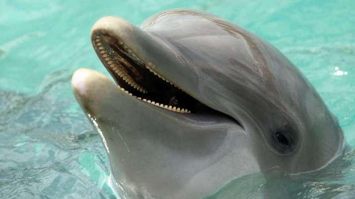 Мы не одиноки: открытие дельфиньего языка (3 фото)
