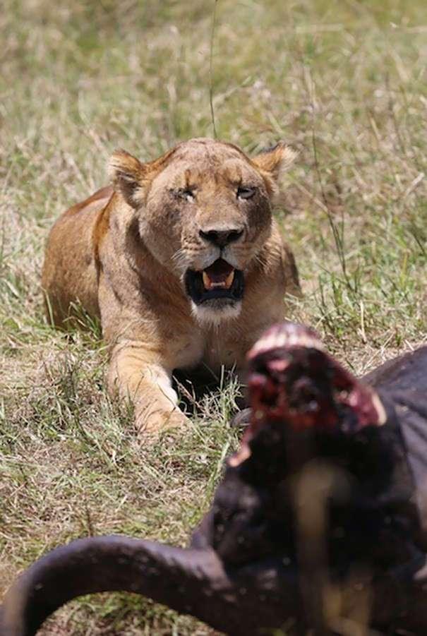 Дерзкая девушка-ветеран армии США против браконьеров в Восточной Африке (15 фото)