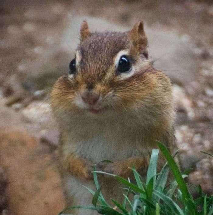 Осторожно: эти животные опасны и вызывают приступ безудержного умиления (16 фото)