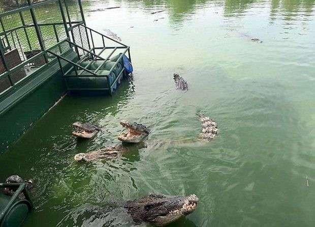 В Таиланде туристам предлагают посетить аттракцион с голодными крокодилами (5 фото)