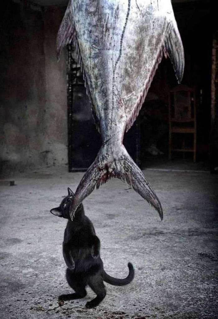 30 веселых фотографий с животными (30 фото)