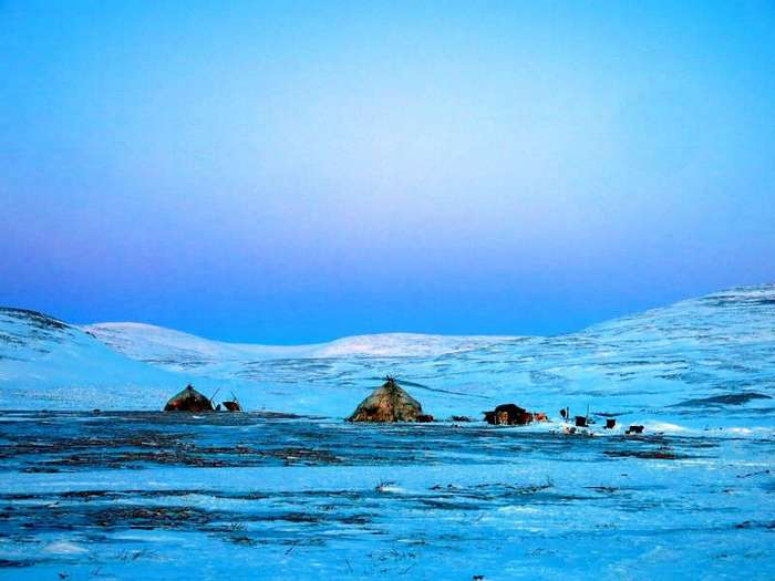 Один день из жизни чукотских оленеводов. Как устроено стойбище (8 фото)