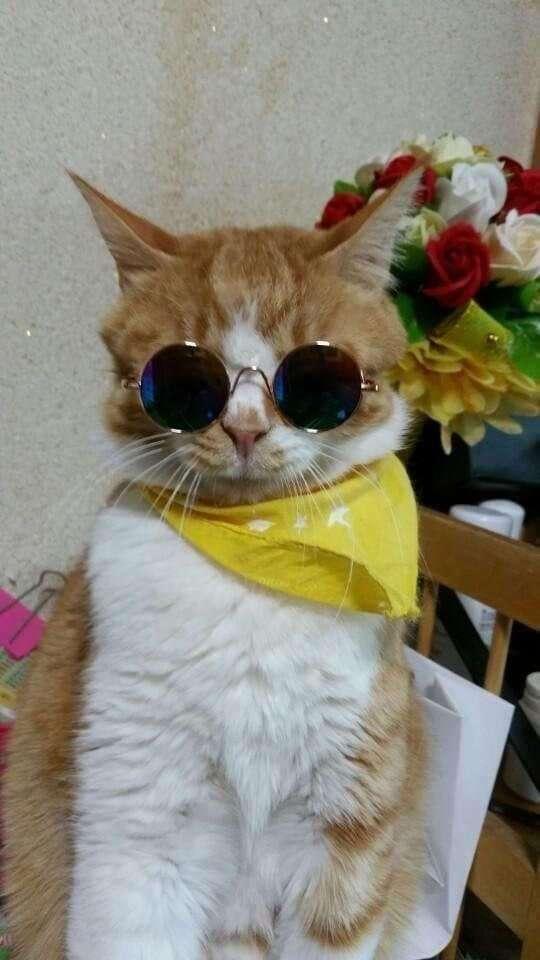 Лето по-кошачьи (22 фото)