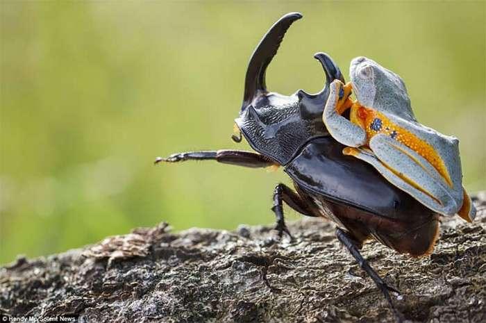 В мире животных: как бесплатно проехаться на жуке (9 фото)