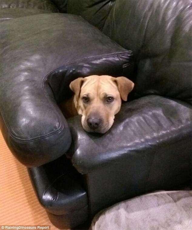 Собаки-хулигаки (29 фото)