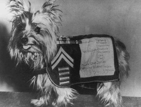 10 знаменитых собак Второй мировой войны (16 фото)