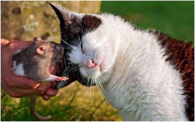 Удивительные факты из жизни обычных мышей