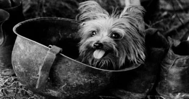 Истории войны: собаки-герои