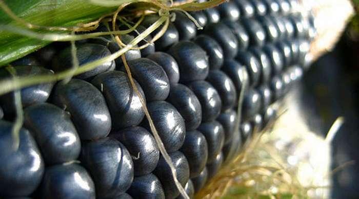 Необычные овощные культуры