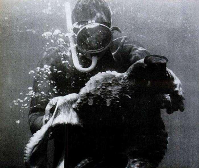 Борьба с осьминогом, популярная в середине прошлого века в США