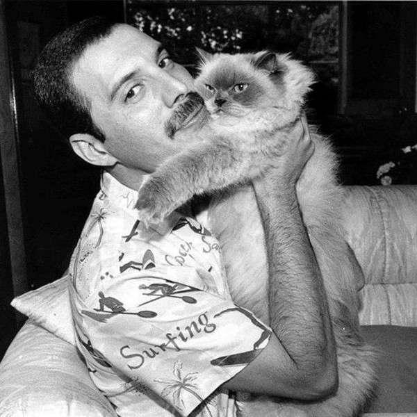 Знаменитости, которые обожали котов