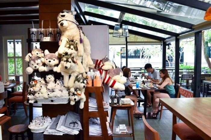 Кафе с хаски &8211; достопримечательность Бангкока