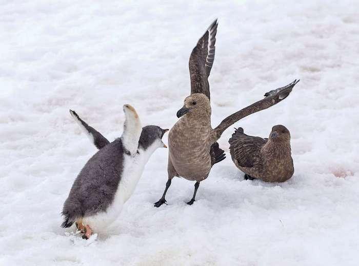 Кстати, о птичках
