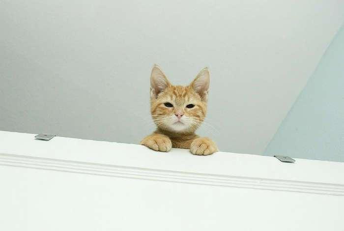17 впечатляющих снимков о том, что коты - пришельцы с другой планеты