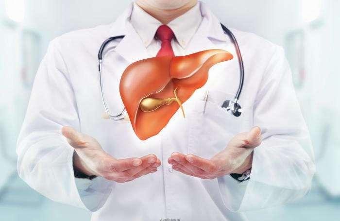 12 любопытных фактов о печени - самом большом внутреннем органе человека