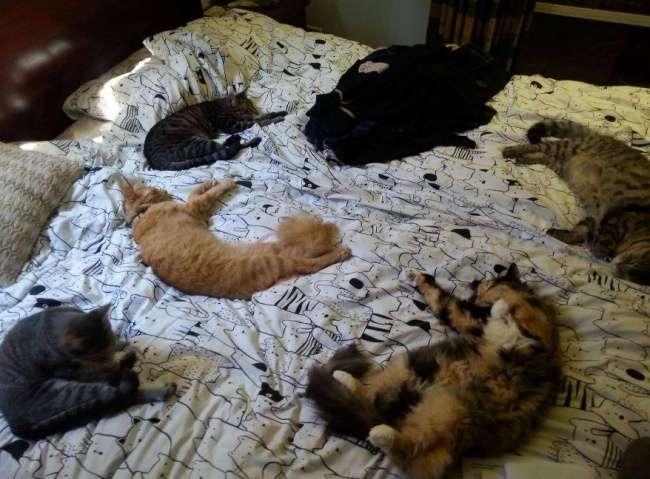 15 причин никогда не заводить котиков (15 фото)