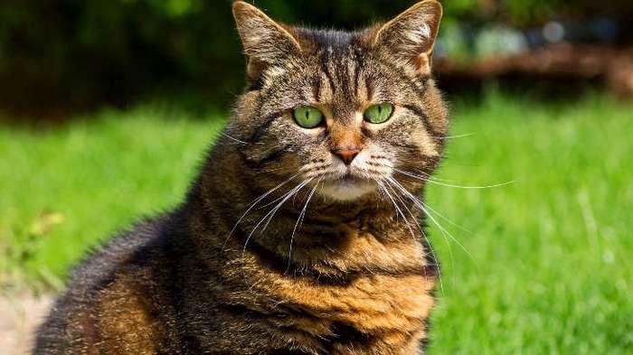 К чему могут привести обнимашки с котами? (8 фото)