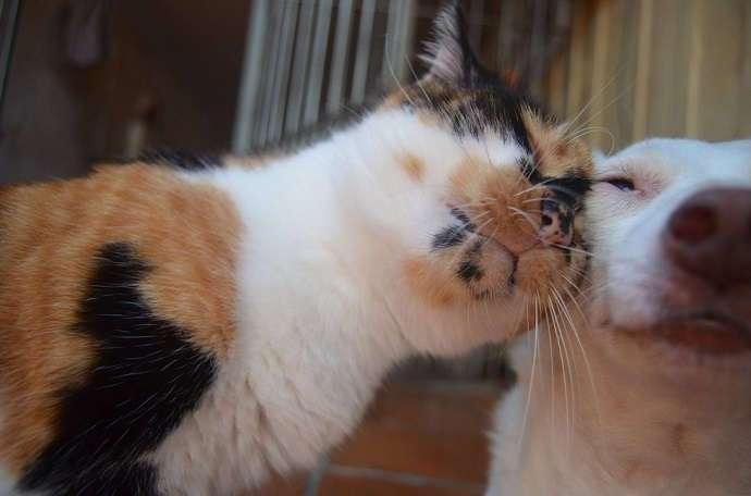 Эта кошка не скрывает своей любви к сестре - собаке! (6 фото)