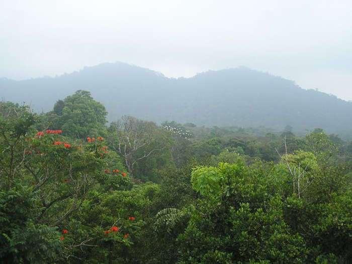 Как за 25 лет создать джунгли на месте пустоши