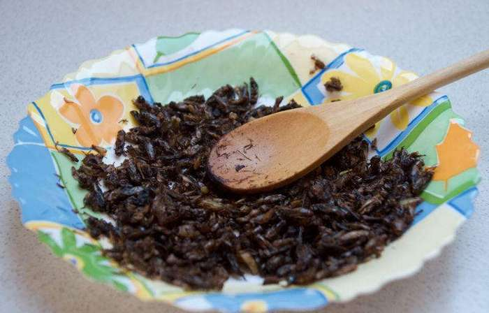 Девушка каждый день готовит насекомых, и ей это нравится