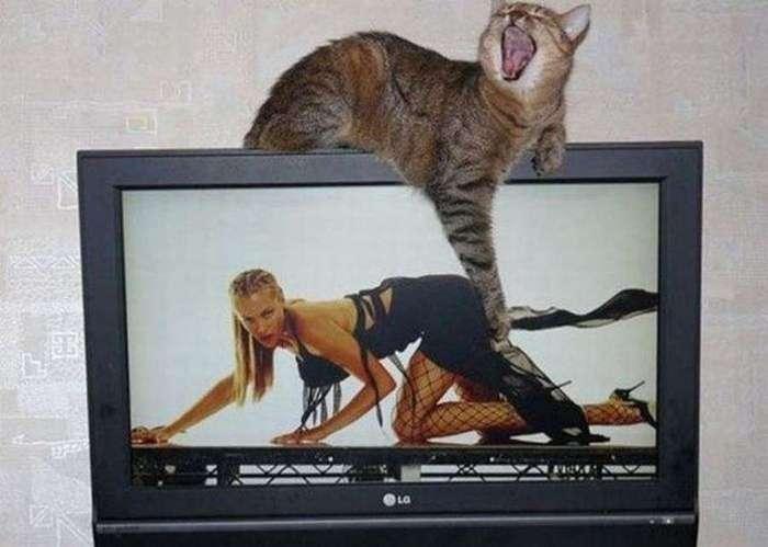 Веселые и прикольные картинки со страниц интернета (65 фото)