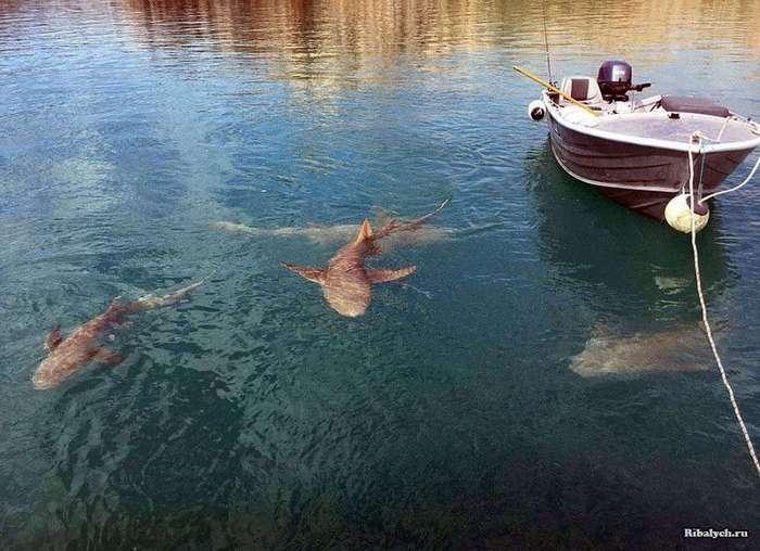 Экстремальная рыбалка в Австралии! (6 фото)
