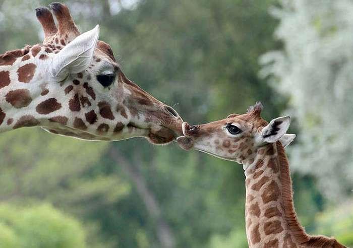 Мамы разные нужны, мамы разные важны