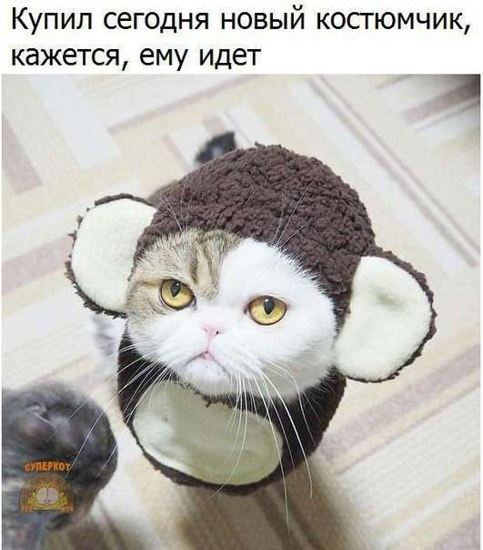 Мой хозяин идиот!!!
