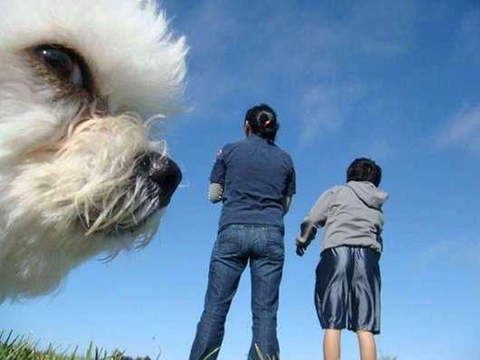 Собаки решившие попасть в кадр