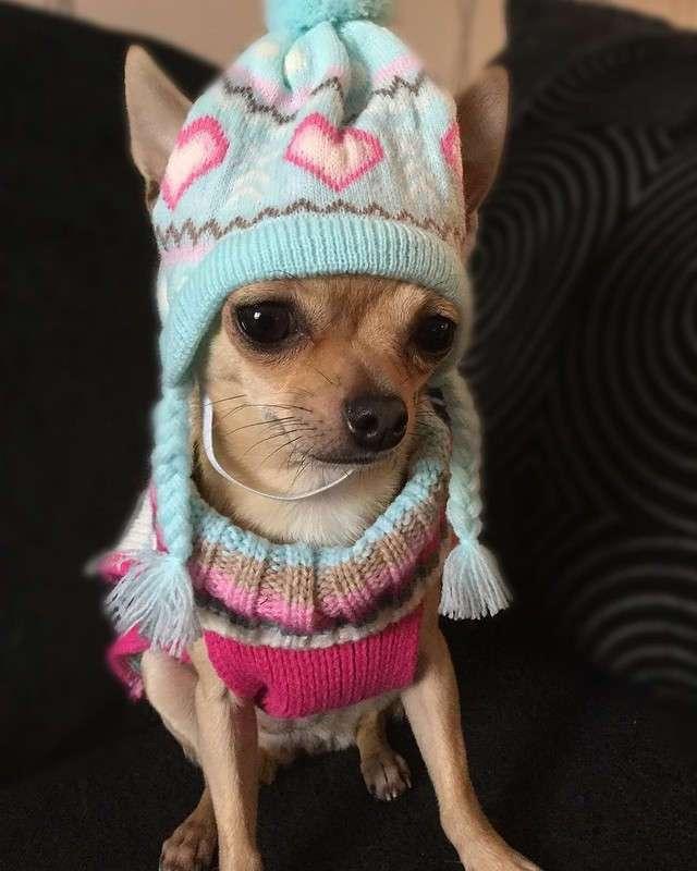 Девушка тратит тысячи долларов на наряды для собаки