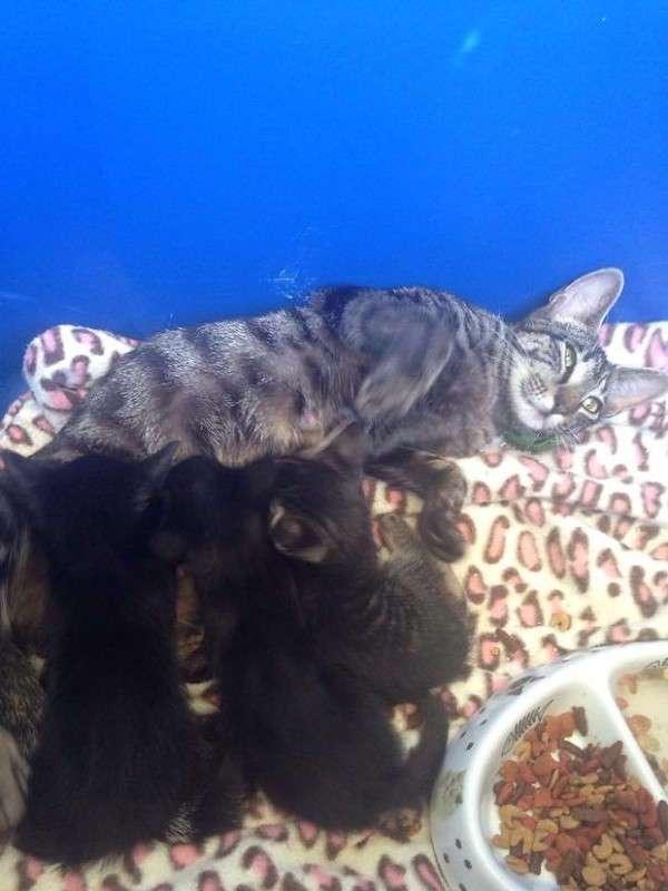 Сюрприз от бродячей кошки