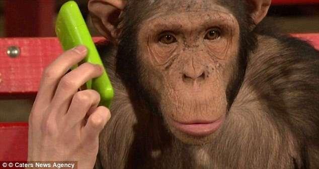 Мрачные тайны развлекательных шоу с животными
