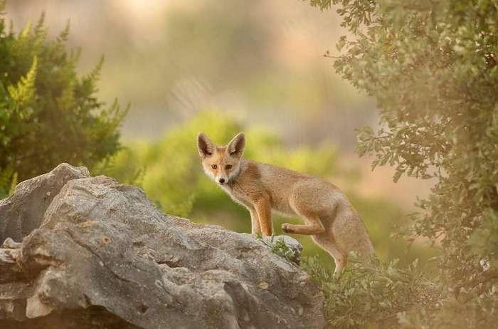 Лучшие фотографии дикой природы со всего мира!