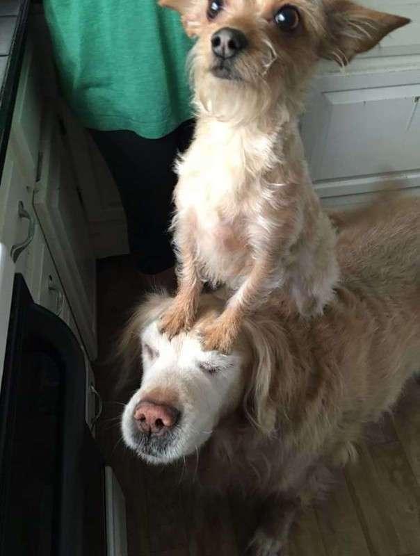 Собачка использует своего дружка, чтобы делать разные вещи