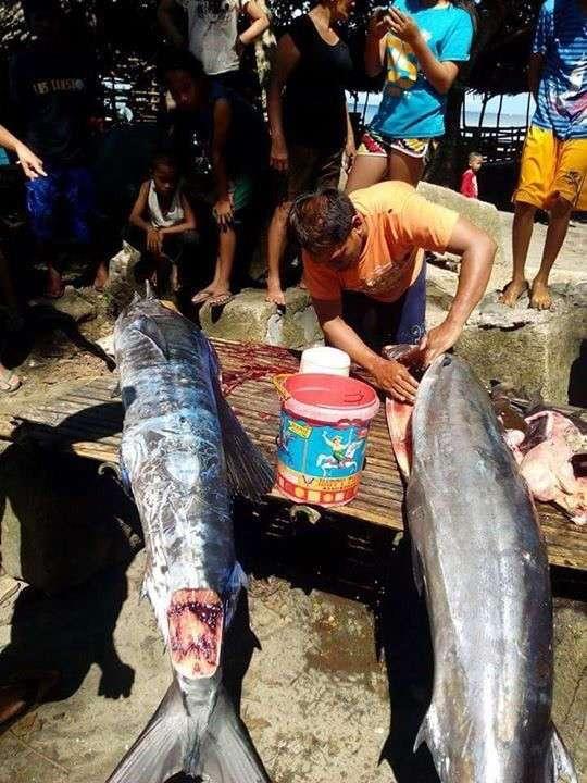 На Филиппинах выловили -татуированную- рыбу