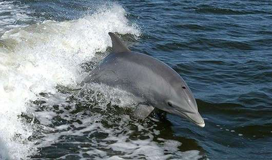 Дельфины и их невероятные способности