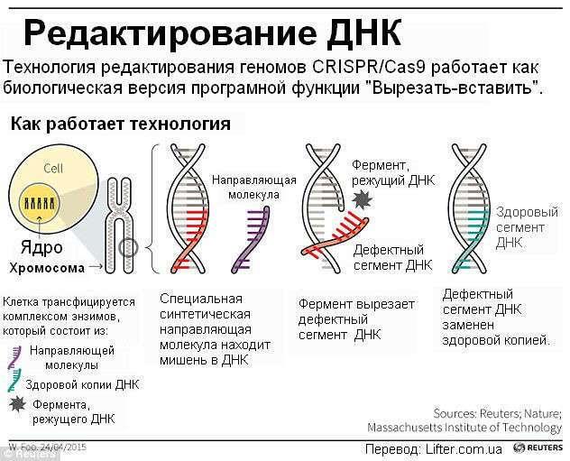 Первое в мире животное вылечено от ВИЧ