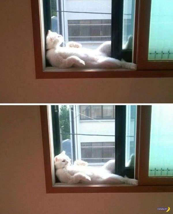 Коты и солнце